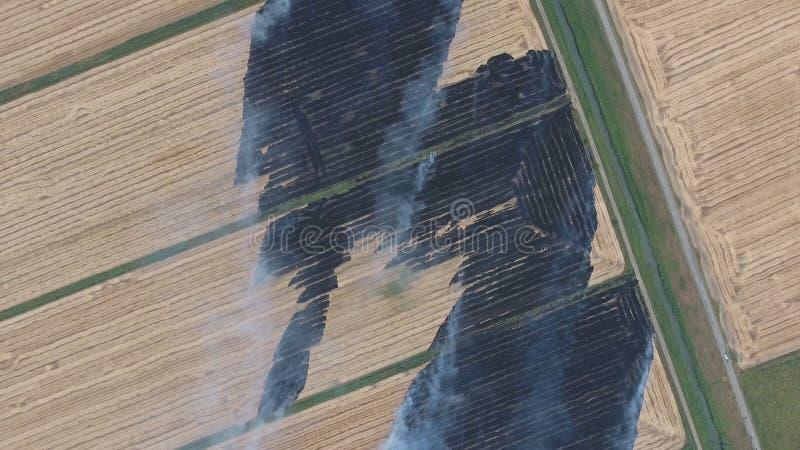 Горение соломы риса в полях Курите от горения соломы риса в проверках Пожар на поле стоковое фото rf