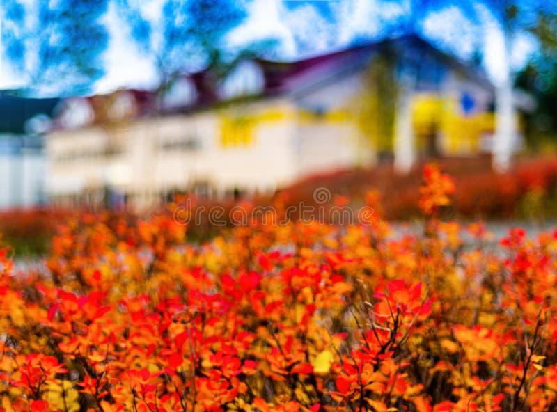 Горизонтальная живая предпосылка абстракции нерезкости дома осени назад стоковое фото rf