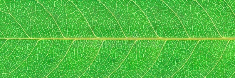 горизонтальная зеленая текстура лист для картины и предпосылки стоковая фотография