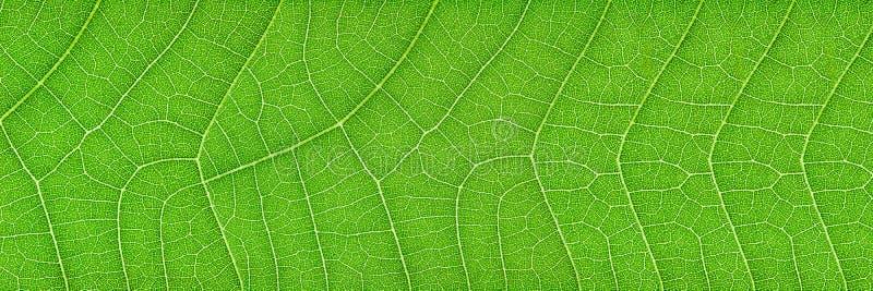 горизонтальная зеленая текстура лист для картины и предпосылки стоковые изображения rf