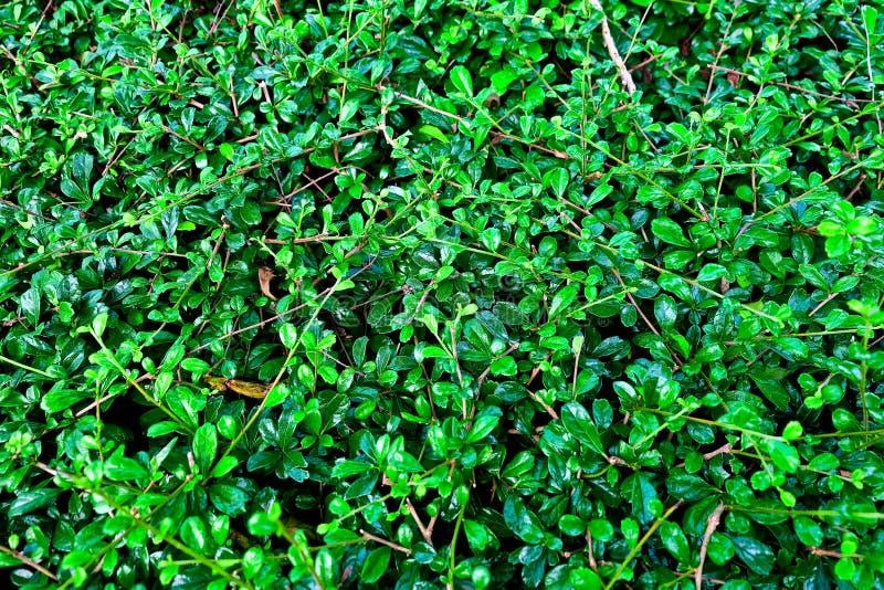 Горизонтальная картина предпосылки зеленых абстрактных листьев стоковые фото