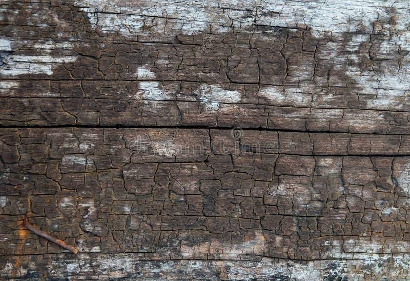 Горизонтальная текстура Брайна деревянной предпосылки зерна стоковая фотография