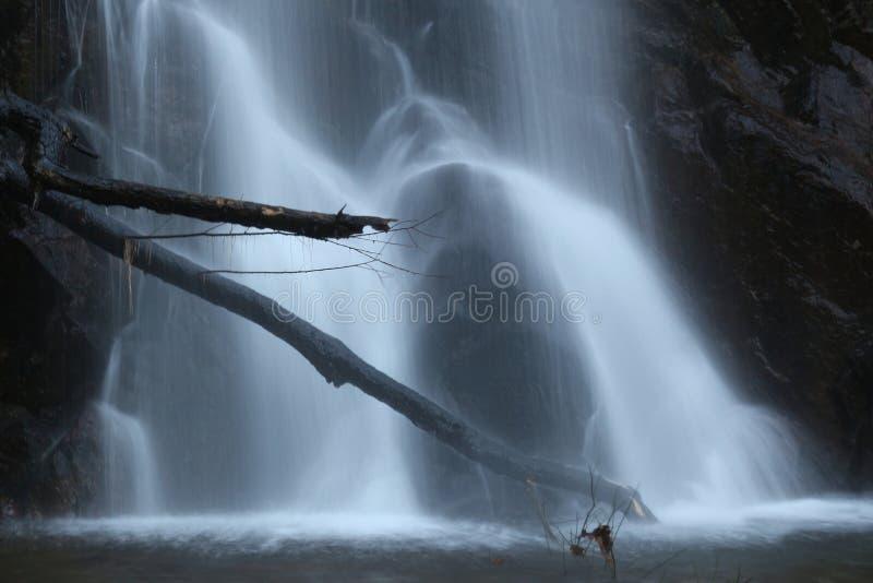 Горизонтальные ветви над движением потока воды стоковые изображения