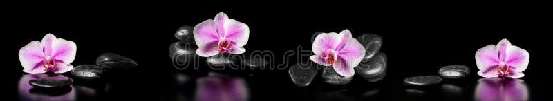 Горизонтальная панорама с розовыми орхидеями и камнями Дзэн стоковая фотография rf