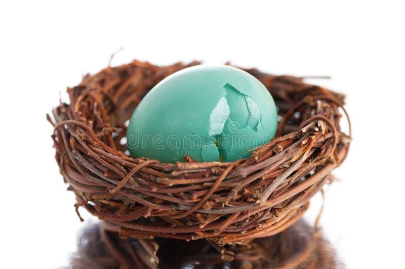 Сломленное яичко робинов в гнезде стоковая фотография rf