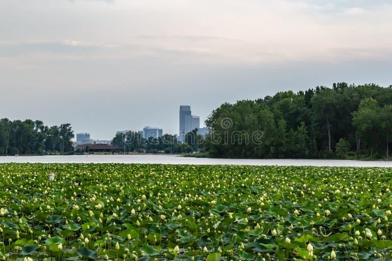 Горизонт Омахи городской от с лилии воды на озере Айове Картер с данником реки стоковые фото