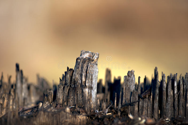 Горизонт пня дерева стоковое фото rf