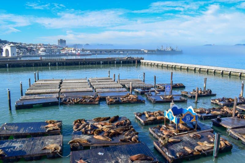 Горизонт Сан-Франциско от пристани 39 с морскими львами, кораблем свободы от WWII и мостом золотых ворот в тумане стоковые фото