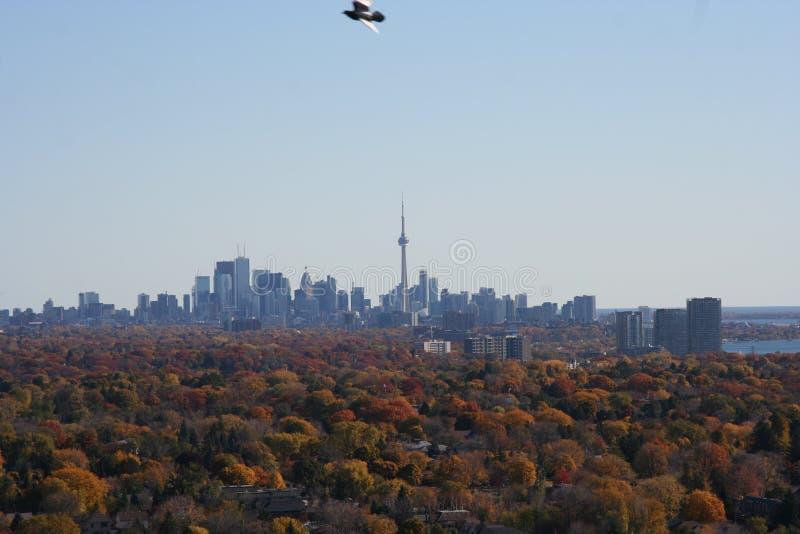 Горизонт Торонто осенью стоковые фотографии rf