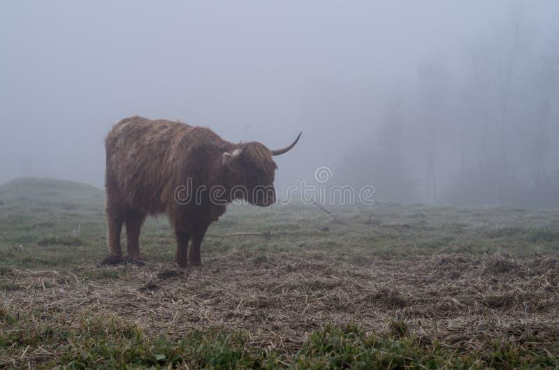 Гористая местность Bull стоковое фото