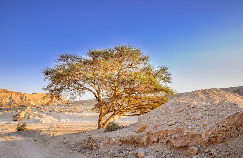 Гористая пустыня, Израиль стоковое фото