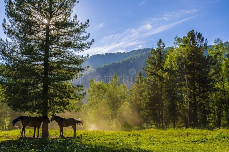 Гористое Altai стоковые фотографии rf