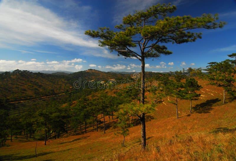 гористые местности Вьетнам dalat стоковое изображение