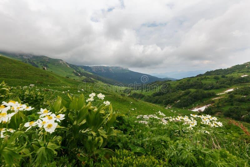 Гористые местности и зеленые луга Oshten Fisht в запасе Кавказ Кавказский запас, гора, регион Краснодар стоковое фото