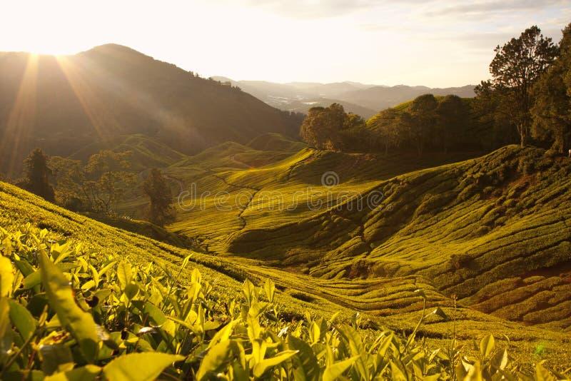 Гористые местности Камерона, Малайзия. стоковые фото