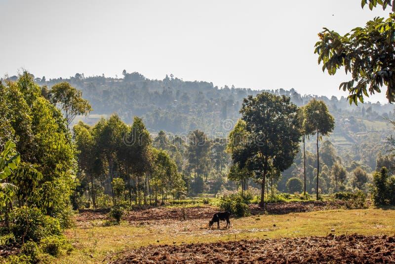Гористые местности Kisii стоковое изображение rf