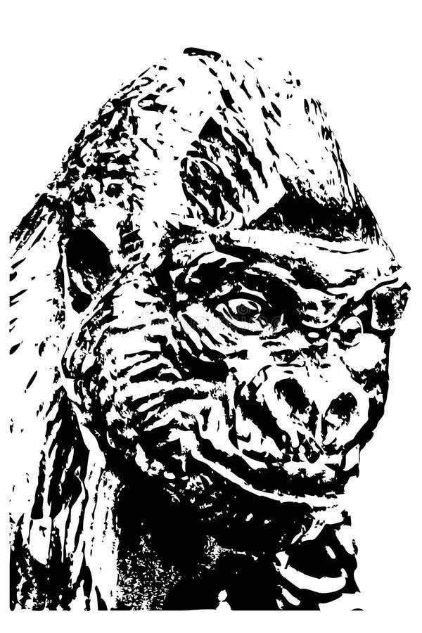 Горилла II стоковая фотография rf