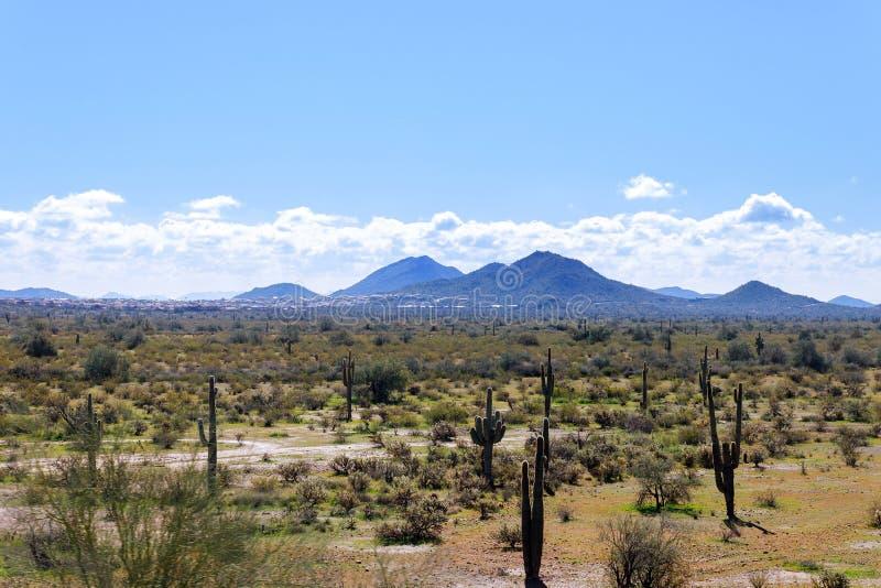 Горная цепь Аризоны с кактусом saguaro, облаками неба и света и другими за стоковое изображение