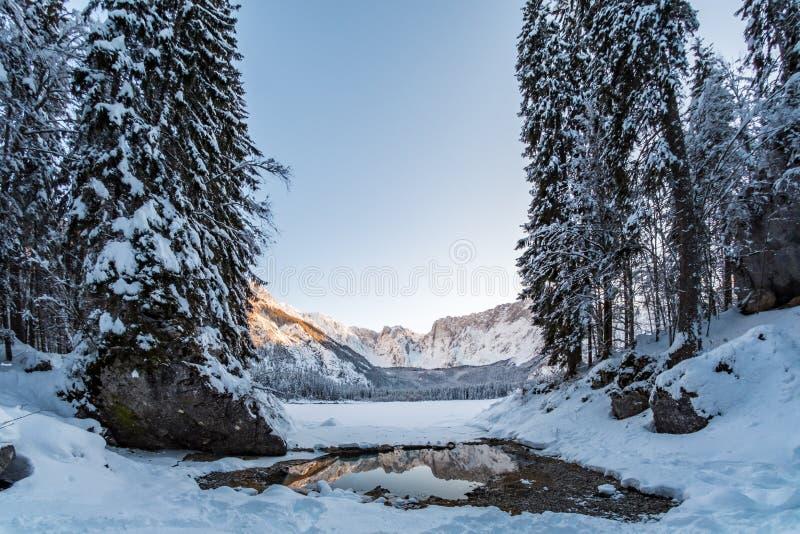 Горная цепь Mangart отражая в таянной части озера Fusine стоковая фотография rf