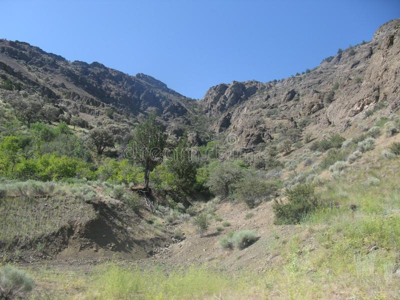 Горные каньоны Boulder и Tree& x27;s на Hillside стоковая фотография rf