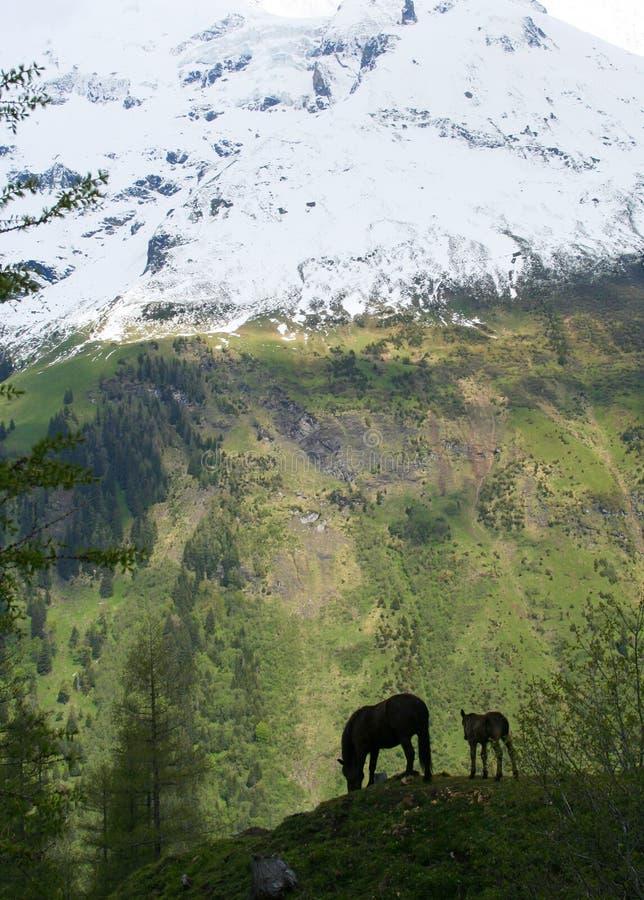 горные склоны лошади осленка стоковое фото