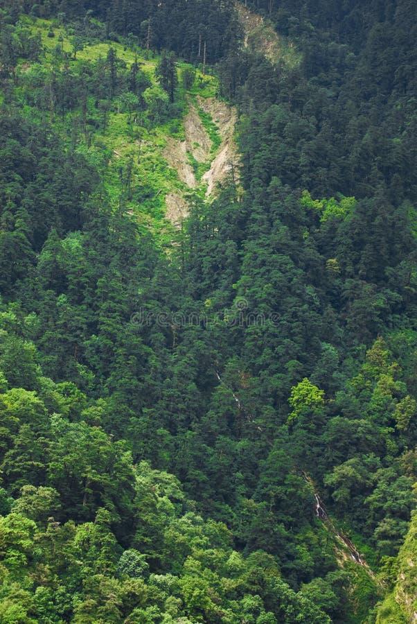 горные склоны пущи стоковые изображения