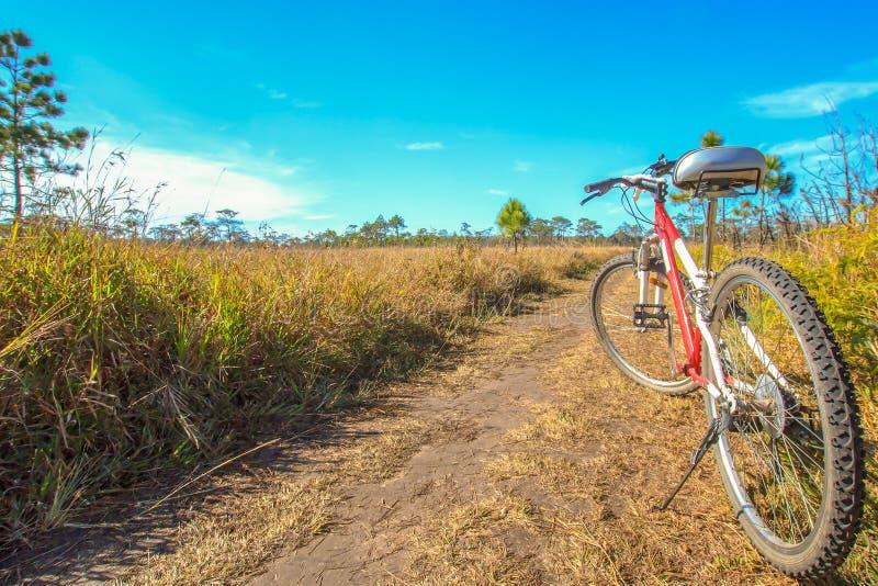 Горный велосипед на дороге стоковое фото