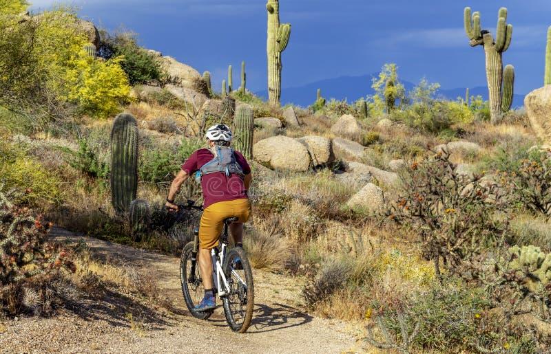 Горный велосипед человека на красивом следе пустыни Аризоны стоковая фотография