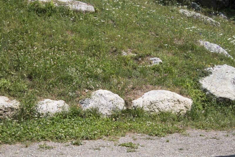Горный луг со скалами стоковые фото