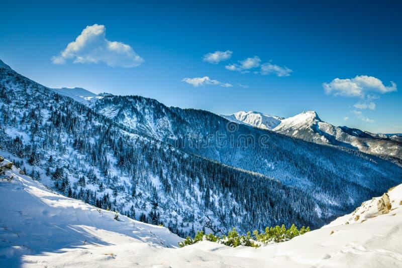 Горный пик Giewont от между пригорков поганит, горох горы стоковое фото