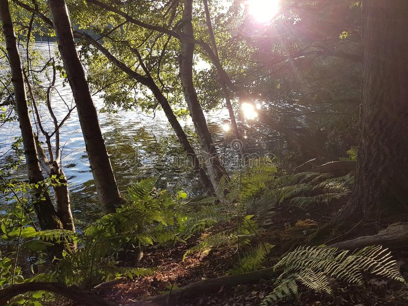Горный склон на озере с деревьями и папоротниками стоковая фотография rf