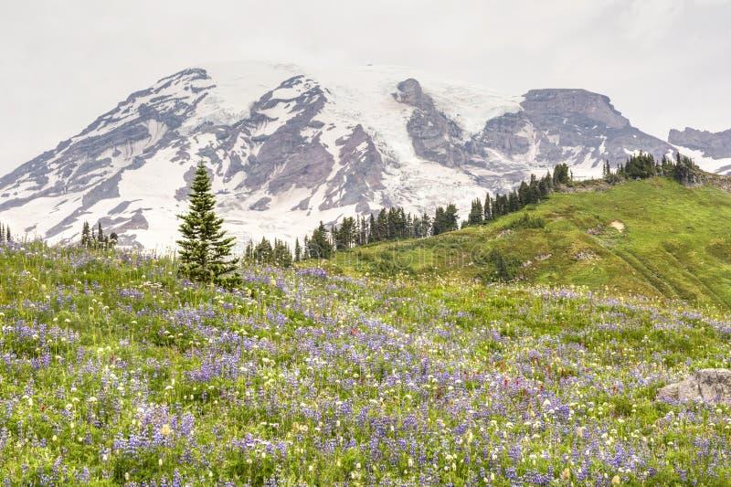 Горный склон Wildflower в рае стоковое фото