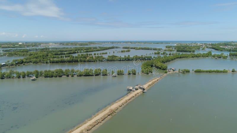 Городок среди воды в мангровах стоковое фото rf