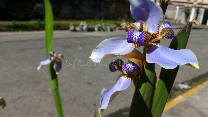 Городские цветки природы стоковая фотография rf