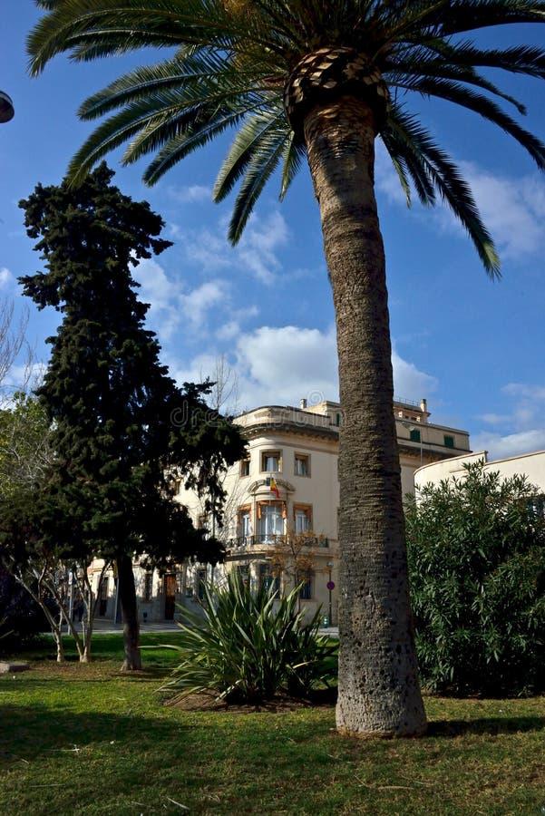 Городской пейзаж с типичным внешним зданием и пальма в Palma de Mallorca стоковое изображение rf