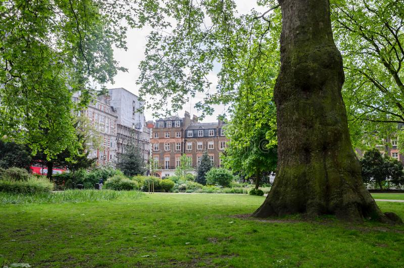 Город/Англия Лондона: Весна в парке квадрата Рассела стоковое изображение