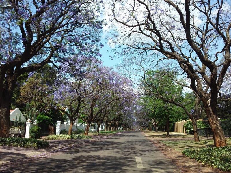Город Jacaranda - Претория в пурпуре стоковые изображения rf
