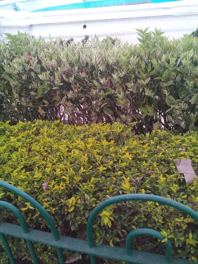 Город mumbai вида на сад стоковое изображение rf
