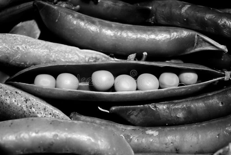 Горохи на черно-белом стоковые изображения rf
