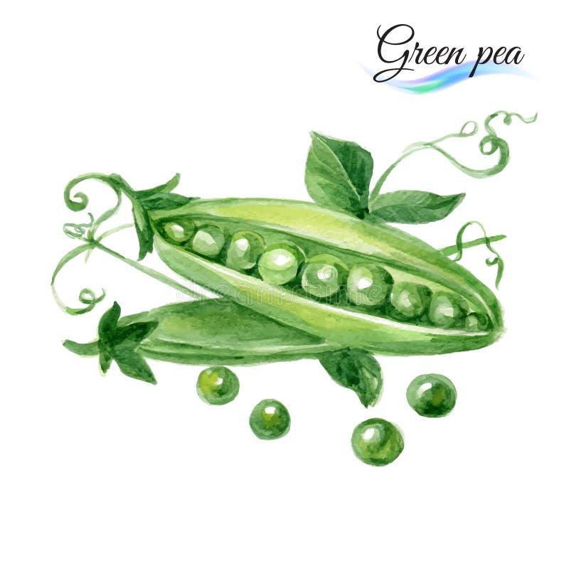 Горох акварели зеленый иллюстрация вектора