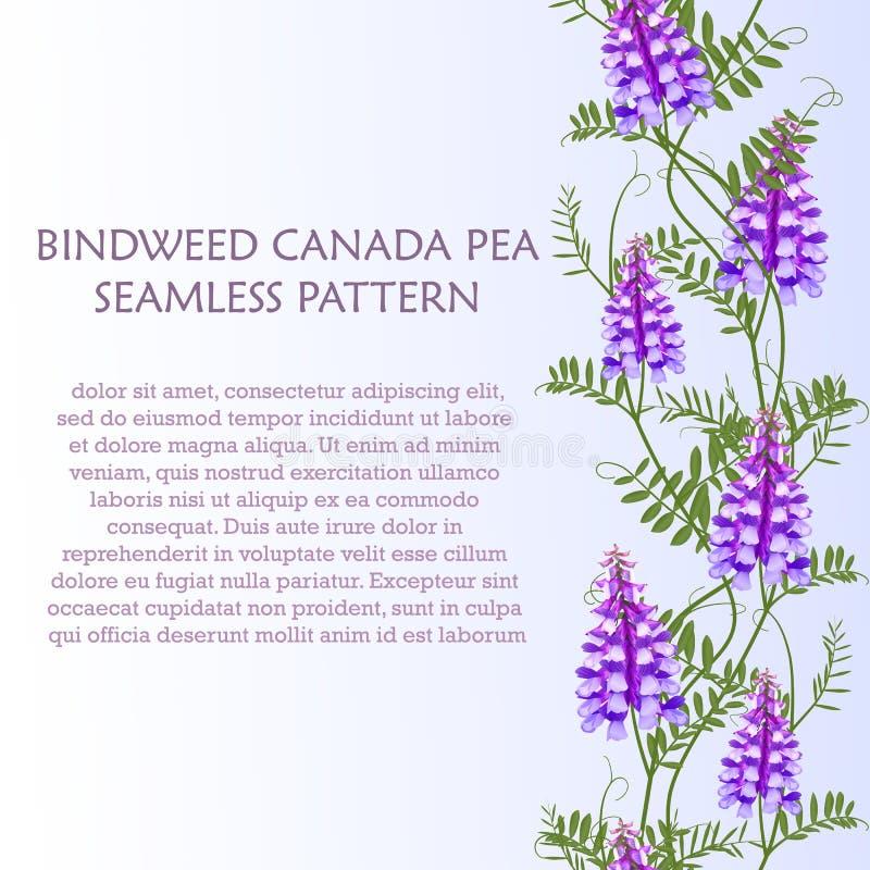 Горох Канады вики птицы вьюнка wildflowers картины вертикальной границы безшовный иллюстрация вектора