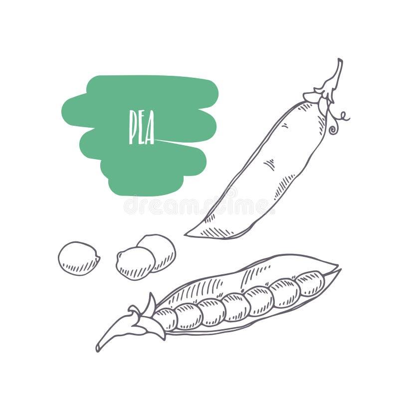 Горох нарисованный рукой изолированный на белизне Сделайте эскиз к овощам стиля с кусками для комплексного конструирования рынка, иллюстрация штока
