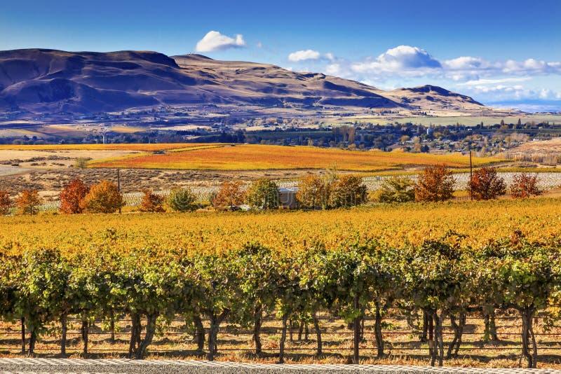 Город Вашингтон Benton горы желтых виноградников падения виноградин лоз красный стоковое изображение