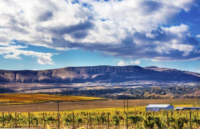 Город Вашингтон Benton горы желтых виноградников падения виноградин лоз красный стоковое фото rf