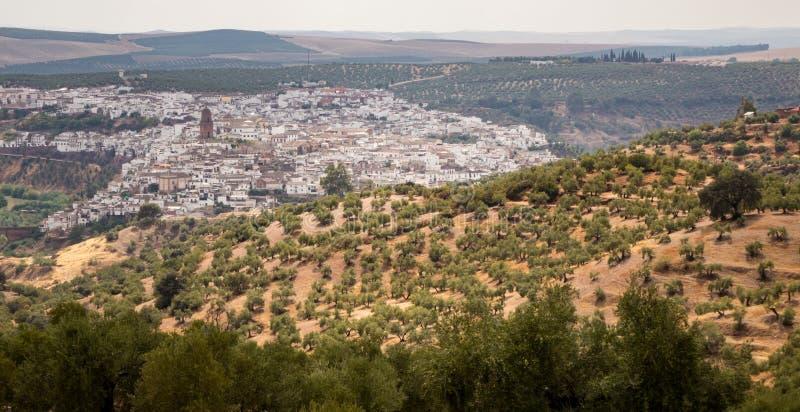 Городок Montoro окружил оливковыми деревами стоковое изображение rf