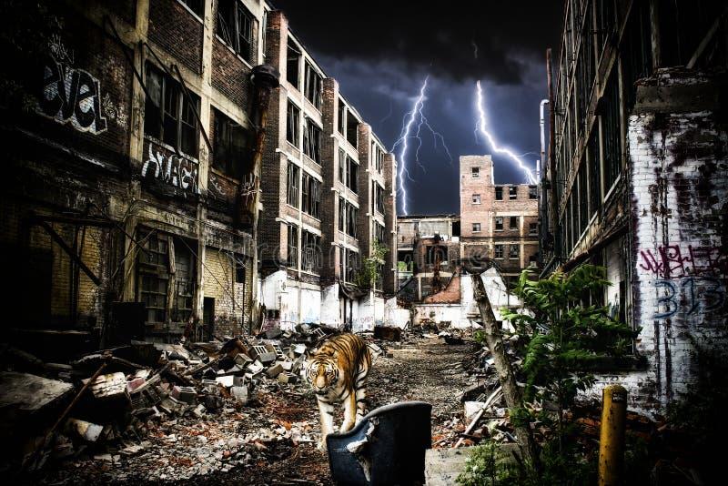 Городской апокалипсис тигра стоковые изображения rf