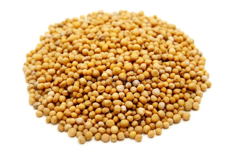 Горчичные зерна стоковые фотографии rf
