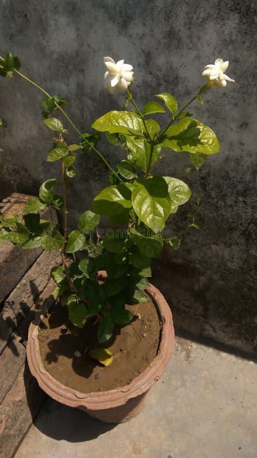 Горшечное растение сада стоковое фото