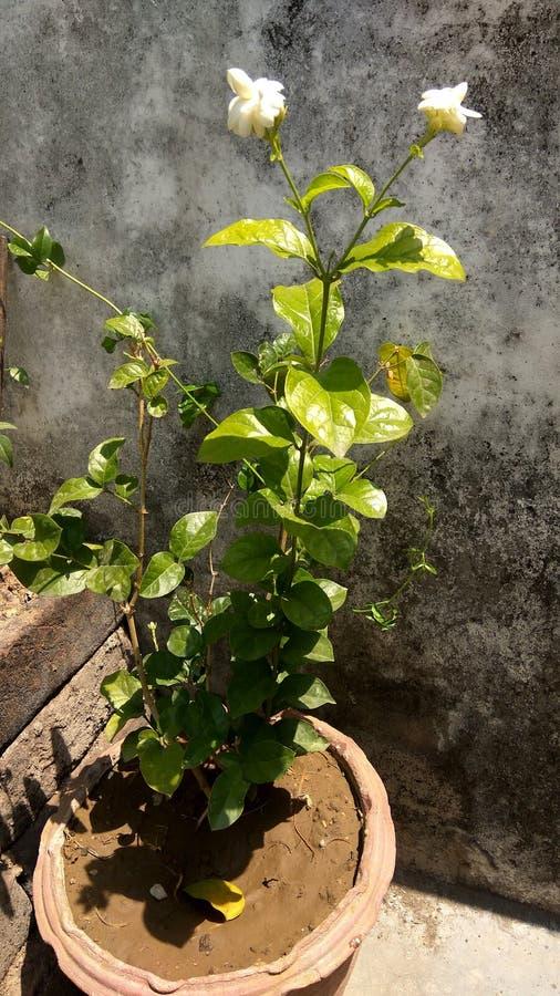 Горшечное растение сада стоковая фотография