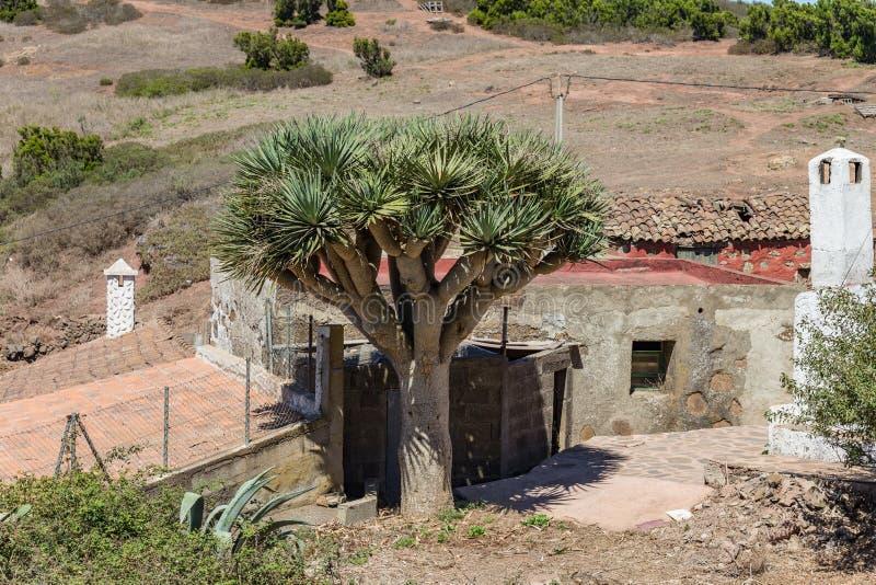 Горы альта Teno Типичная деревня со старыми домами Зеленые холмы покрытые с вереском и лаврами Кактус, голубой столетник и гигант стоковое фото rf